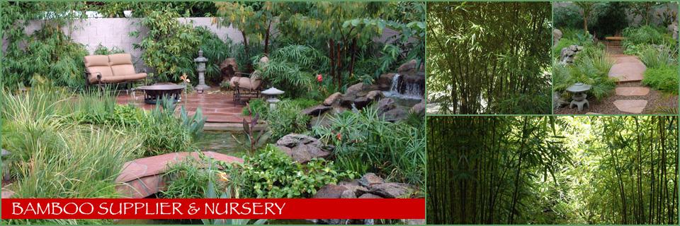 Tempe Bamboo Nursery | Kona Landscape Bamboo Supplier